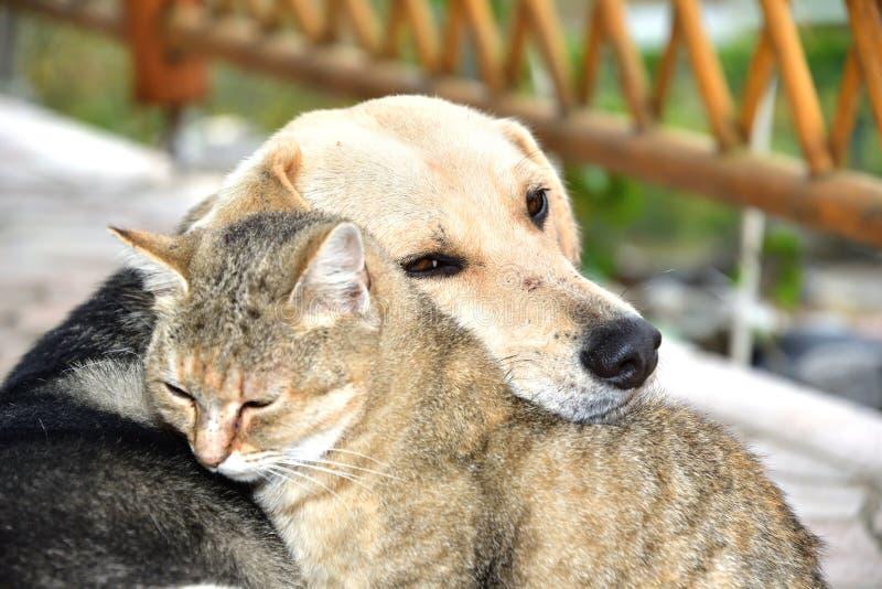 Σκυλί και γάτα που αγκαλιάζουν στοργικά στους ζωικούς καλύτερους φίλους αγάπης στοκ εικόνα