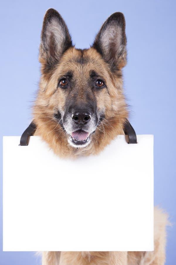 Σκυλί και κενό έμβλημα στοκ εικόνα