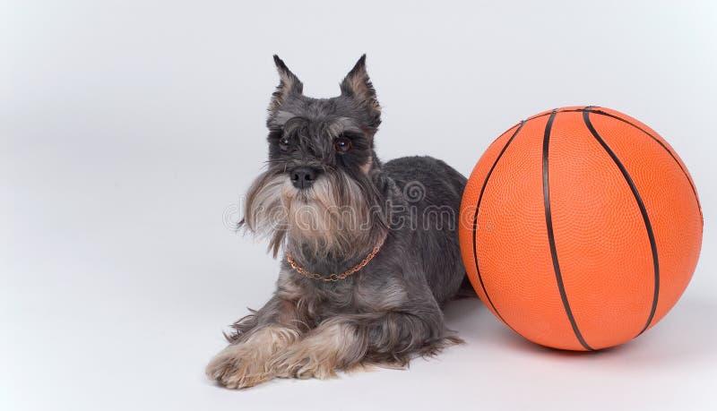 Σκυλί και μια σφαίρα καλαθοσφαίρισης στοκ φωτογραφίες με δικαίωμα ελεύθερης χρήσης