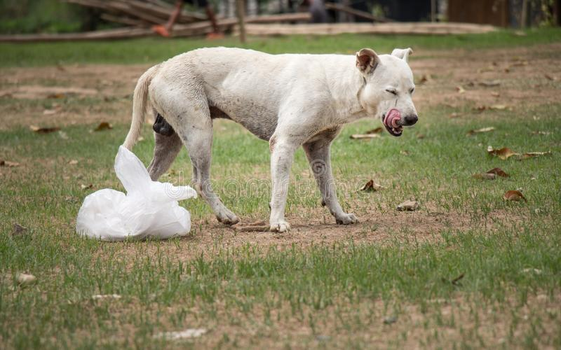 Σκυλί και τρόφιμα στοκ φωτογραφίες με δικαίωμα ελεύθερης χρήσης