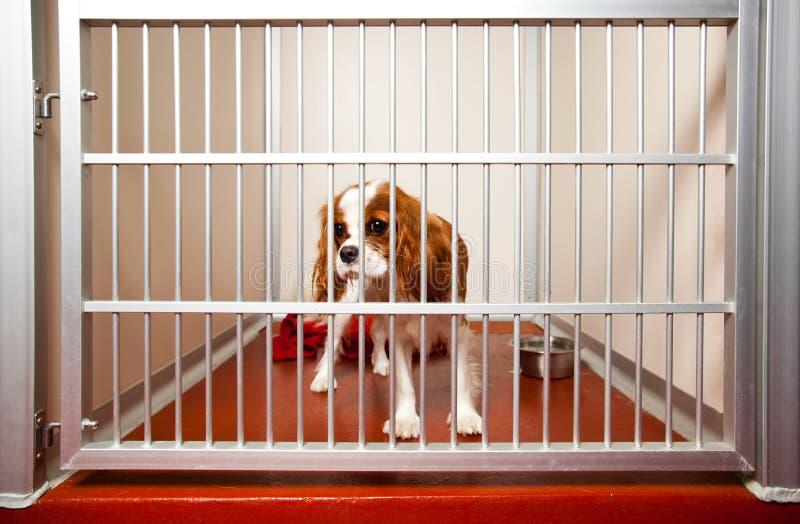σκυλί κλουβιών στοκ εικόνα