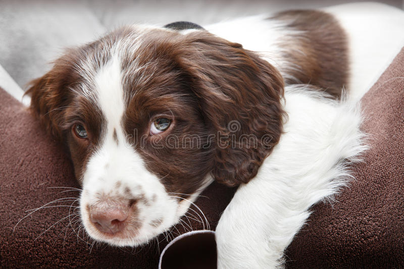 Σκυλί κουταβιών στο comfy σπορείο στοκ εικόνες με δικαίωμα ελεύθερης χρήσης