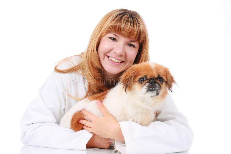 σκυλί λίγος κτηνίατρος στοκ εικόνες