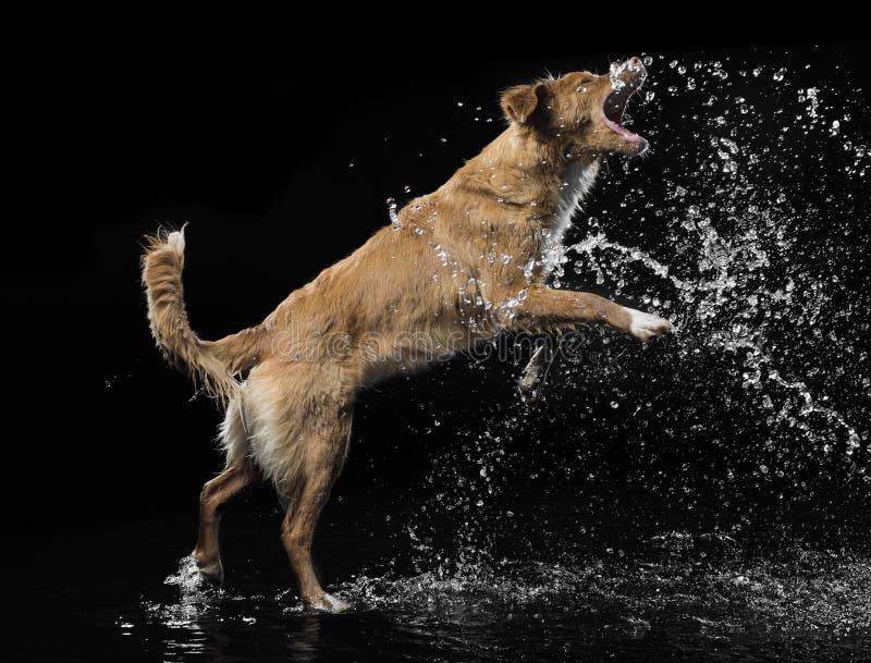 σκυλί λίγος ποταμός σχεδιαγράμματος στοκ φωτογραφία με δικαίωμα ελεύθερης χρήσης