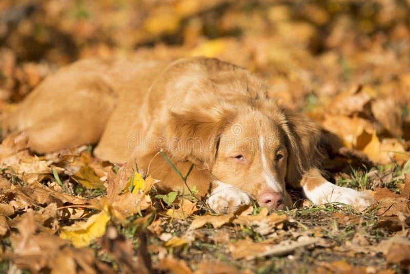 σκυλί λίγος ποταμός σχεδιαγράμματος στοκ φωτογραφίες με δικαίωμα ελεύθερης χρήσης