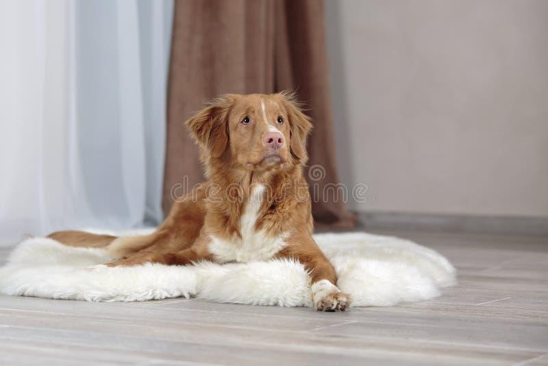 σκυλί λίγος ποταμός σχεδιαγράμματος στοκ εικόνες με δικαίωμα ελεύθερης χρήσης