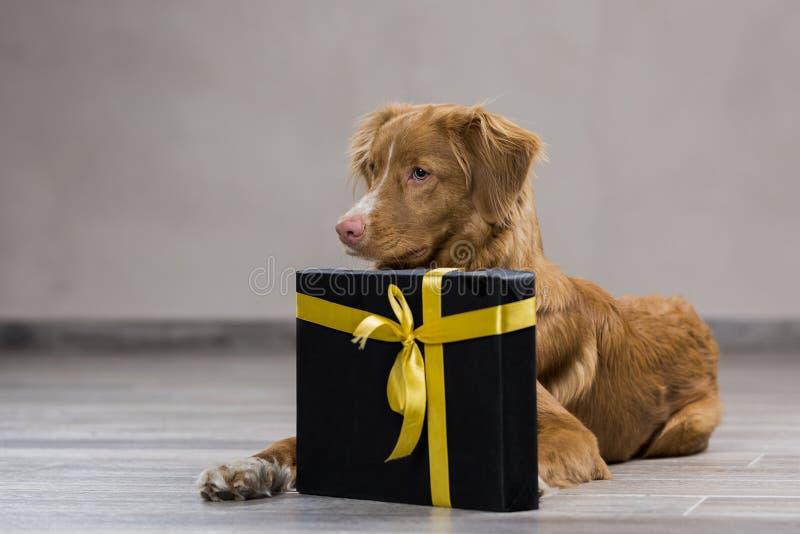 σκυλί λίγος ποταμός σχεδιαγράμματος στοκ εικόνα με δικαίωμα ελεύθερης χρήσης
