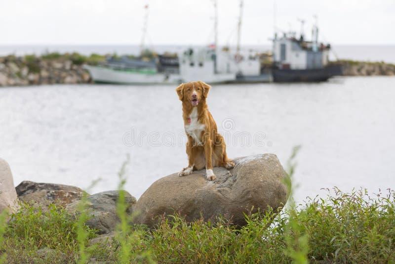 σκυλί λίγος ποταμός σχεδιαγράμματος στοκ εικόνες