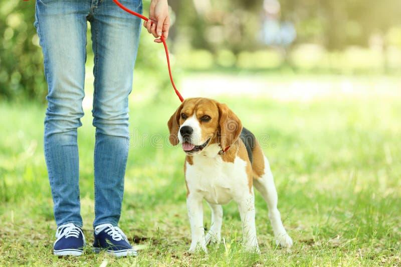 Σκυλί λαγωνικών στο πάρκο στοκ φωτογραφίες