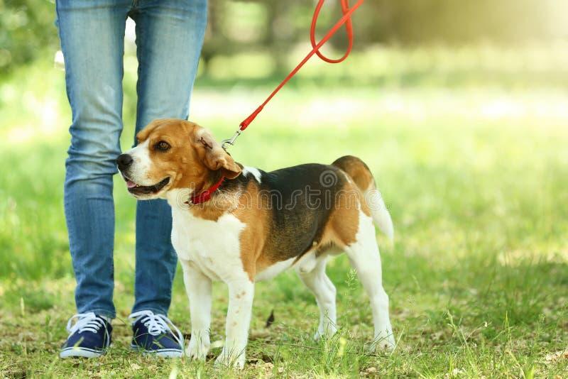 Σκυλί λαγωνικών στο πάρκο στοκ εικόνα