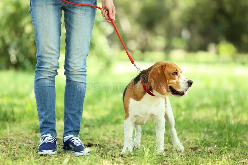 Σκυλί λαγωνικών στο πάρκο στοκ φωτογραφία