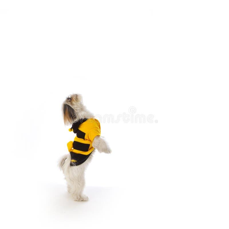 σκυλί μελισσών στοκ εικόνες