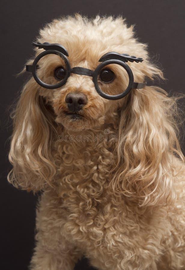 σκυλί μεταμφίεσης στοκ φωτογραφία με δικαίωμα ελεύθερης χρήσης