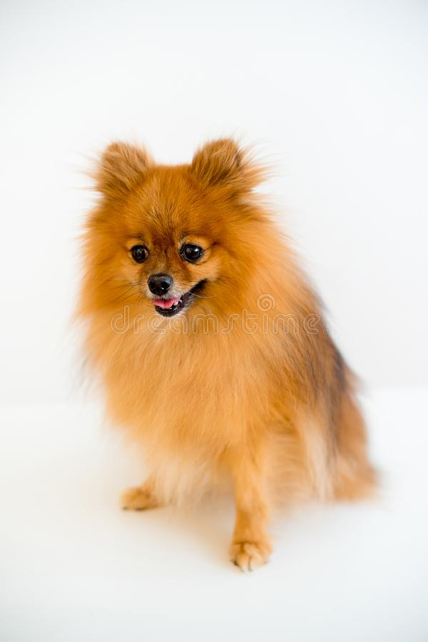 Σκυλί με έναν κτηνίατρο στοκ εικόνες με δικαίωμα ελεύθερης χρήσης