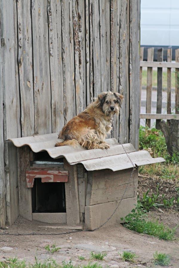 Σκυλί με τη συνεδρίαση αλυσίδων στο θάλαμο στοκ εικόνες με δικαίωμα ελεύθερης χρήσης