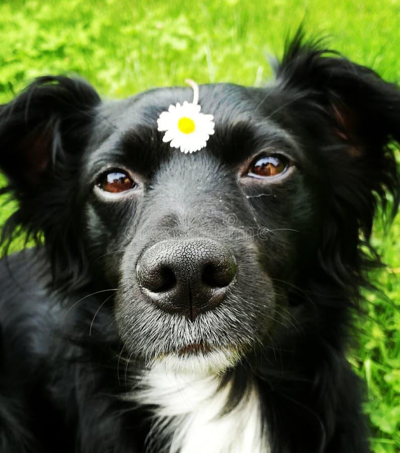 Σκυλί με το λουλούδι στοκ εικόνα