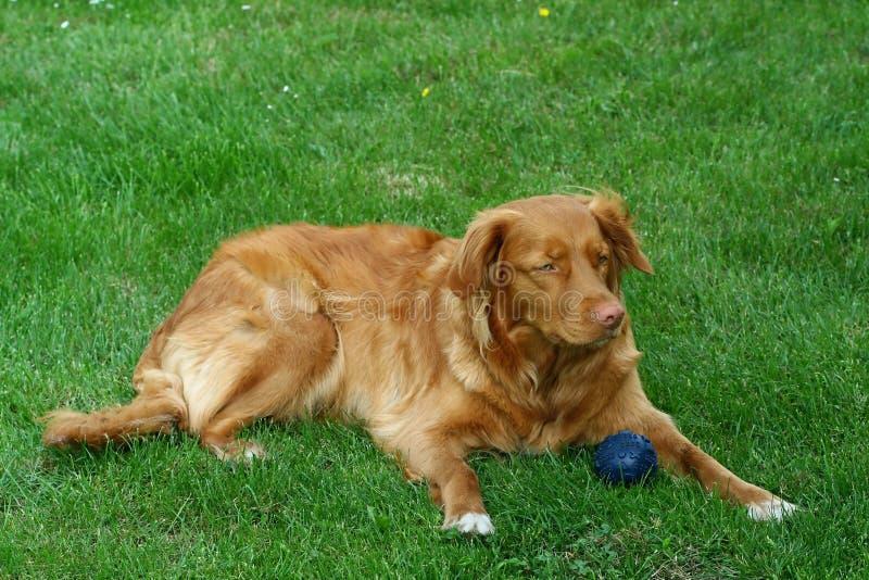 σκυλί μου στοκ φωτογραφία με δικαίωμα ελεύθερης χρήσης