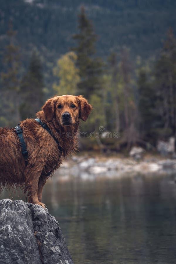 Σκυλί μπροστά από το Eibsee στοκ εικόνα με δικαίωμα ελεύθερης χρήσης