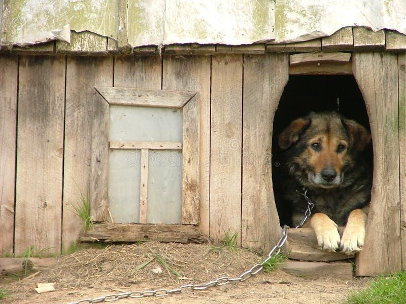 σκυλί μόνο στοκ εικόνα με δικαίωμα ελεύθερης χρήσης