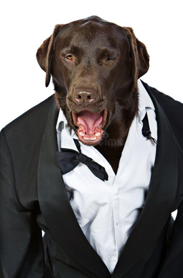 σκυλί να φωνάξει κατατάξεών του το κορυφαίο σμόκιν στοκ εικόνα