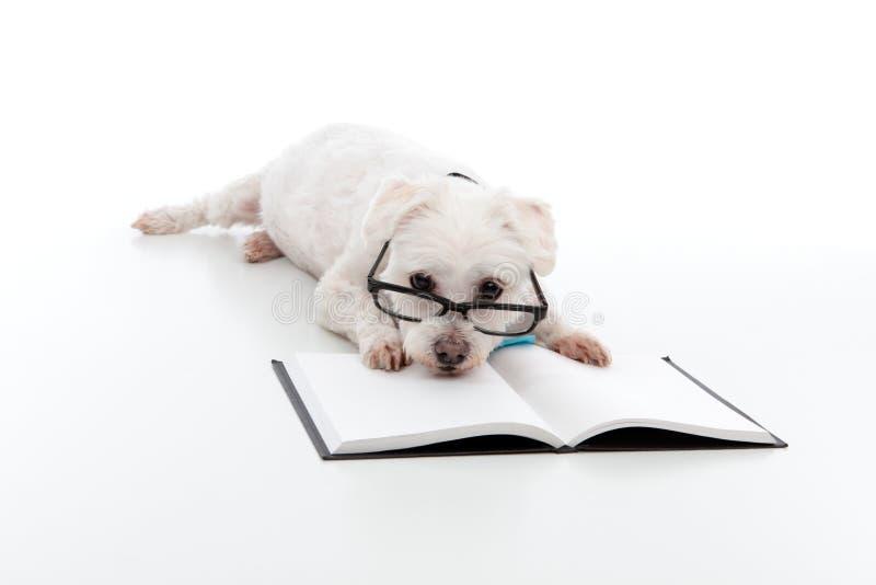 σκυλί οκνηρό στοκ εικόνα