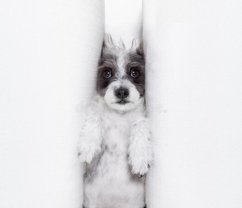 Σκυλί ουδετεροποίησης υπό πίεση στοκ εικόνα