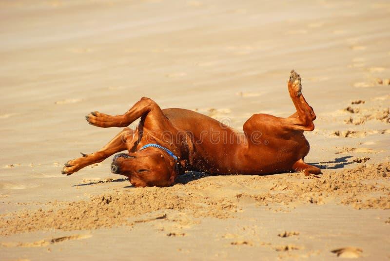 σκυλί πέρα από το κύλισμα στοκ εικόνες