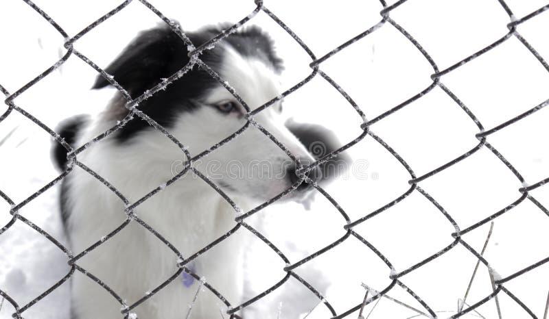 Σκυλί πίσω από έναν φράκτη, καταφύγιο στοκ φωτογραφία με δικαίωμα ελεύθερης χρήσης