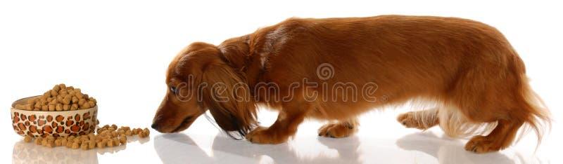 σκυλί πεινασμένο στοκ εικόνες