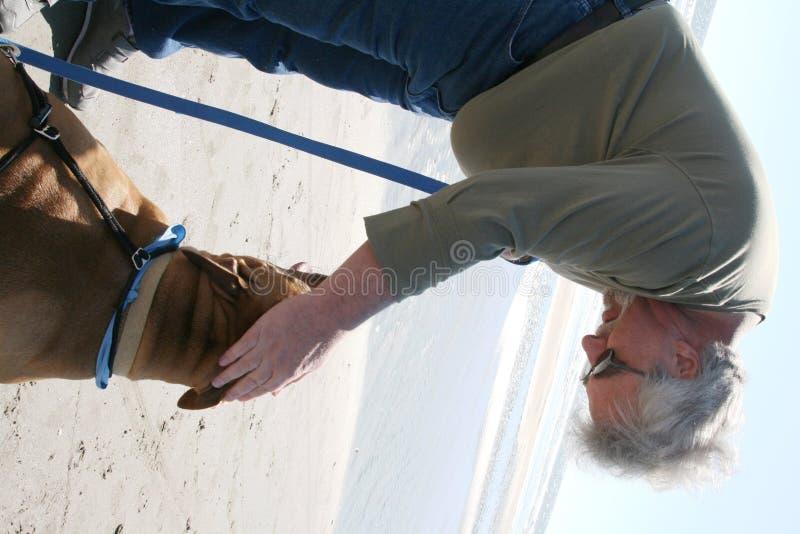 σκυλί περπατήματος ατόμων στην παραλία στοκ φωτογραφία