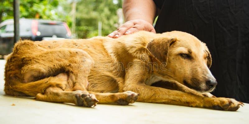 Σκυλί που έχει ανάγκη από προσοχή και ιατρική στοκ εικόνες