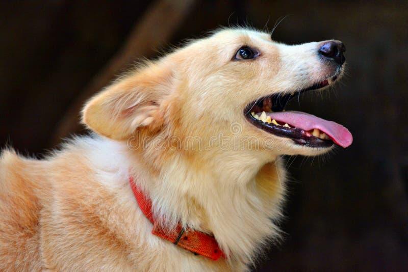 σκυλί που ανατρέχει στοκ εικόνες