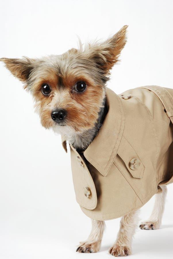 σκυλί που απομονώνεται στοκ εικόνες με δικαίωμα ελεύθερης χρήσης