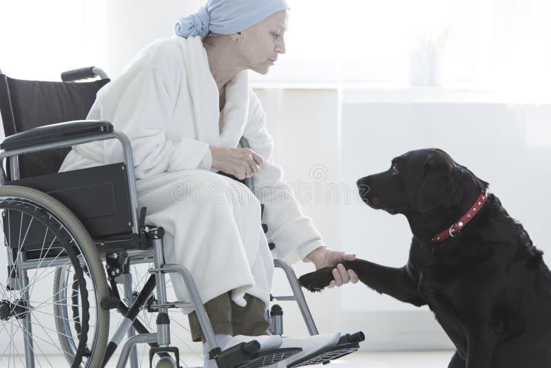 Σκυλί που δίνει τη με ειδικές ανάγκες γυναίκα ποδιών στοκ εικόνες
