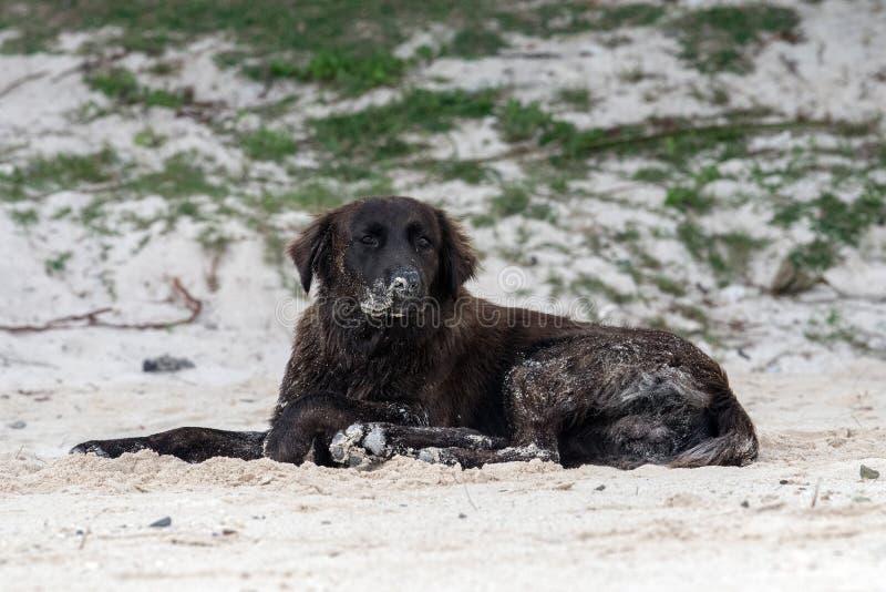 Σκυλί που καλύπτεται από την άμμο στην παραλία στοκ φωτογραφία με δικαίωμα ελεύθερης χρήσης