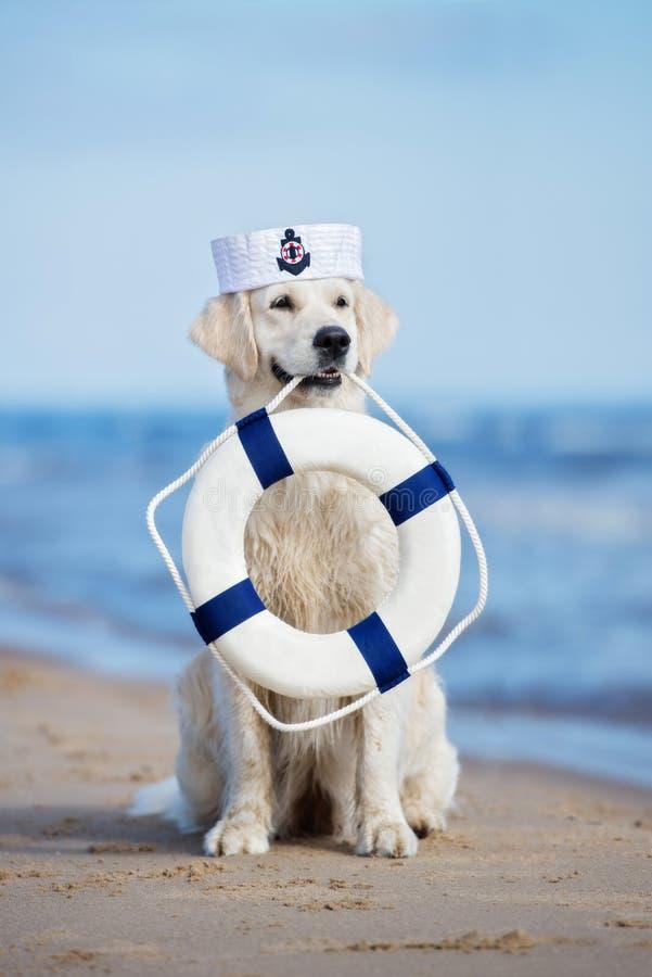 σκυλί που κρατά έναν σημαντήρα ζωής στην παραλία στοκ εικόνα με δικαίωμα ελεύθερης χρήσης