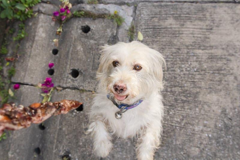 Σκυλί που παίρνει τα τρόφιμα από τον ιδιοκτήτη στην οδό Εστίαση στο σκυλί στοκ φωτογραφίες