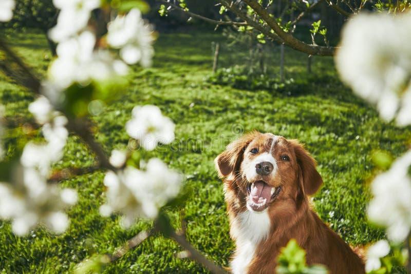 Σκυλί που στηρίζεται στον κήπο στοκ εικόνα
