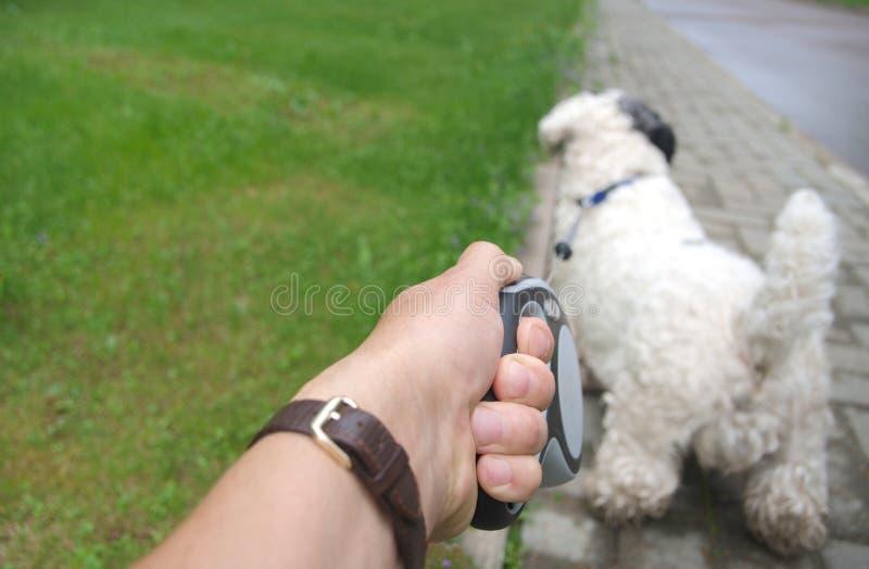 Σκυλί που τραβά στο λουρί στοκ εικόνες