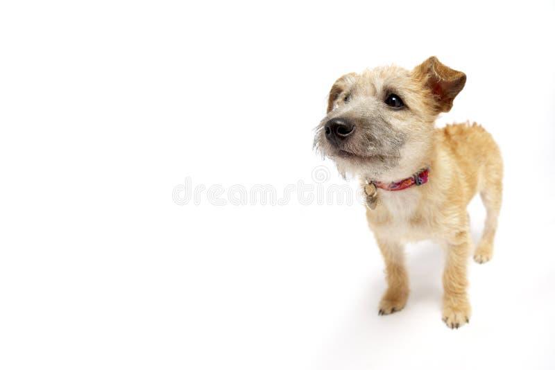 σκυλί που φαίνεται μικρή &sigm στοκ φωτογραφίες