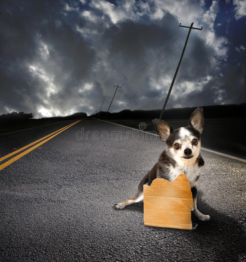 σκυλί που χάνεται