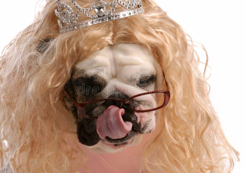 σκυλί που χαλούν στοκ εικόνα