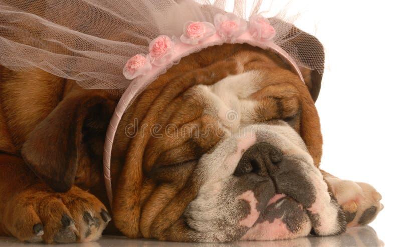 σκυλί που χαλούν στοκ φωτογραφία με δικαίωμα ελεύθερης χρήσης