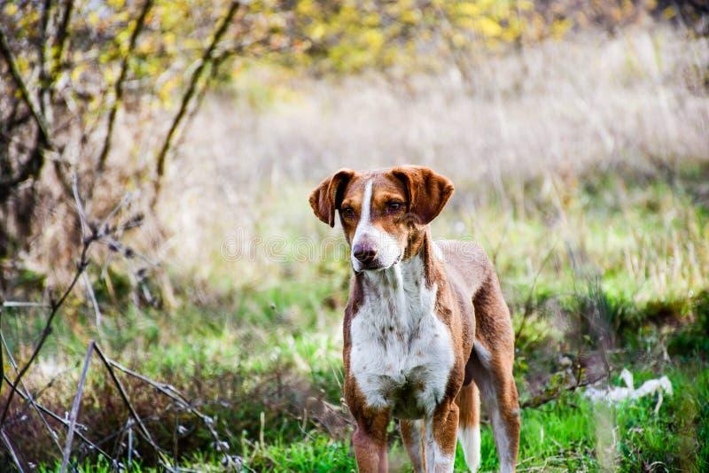 Σκυλί προβάτων στοκ φωτογραφία με δικαίωμα ελεύθερης χρήσης