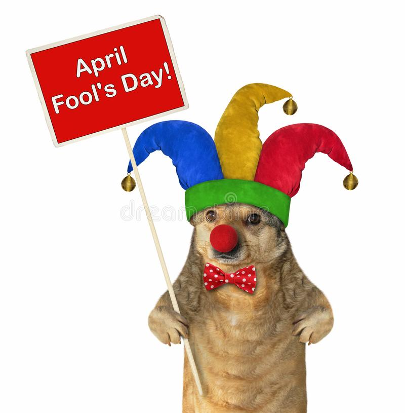 Σκυλί σε ένα jester καπέλο με μια αφίσα στοκ εικόνες με δικαίωμα ελεύθερης χρήσης