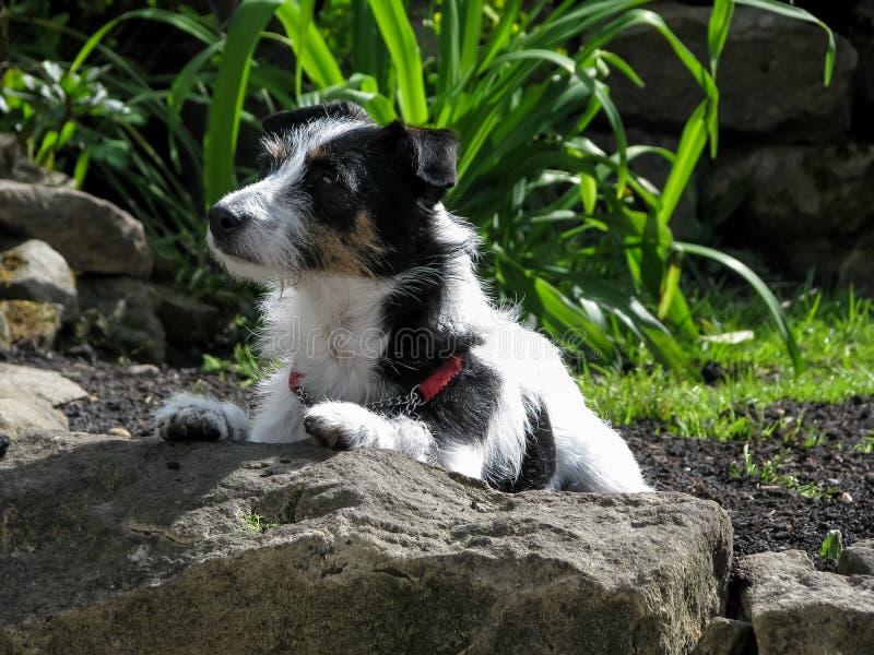 Σκυλί στον κήπο που ξαπλώνει με τα πόδια στο βράχο στοκ εικόνα με δικαίωμα ελεύθερης χρήσης