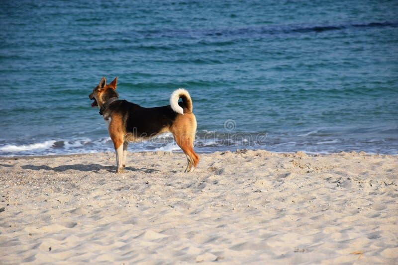Σκυλί στον περίπατο παραλιών κοντά στη θάλασσα στοκ φωτογραφία με δικαίωμα ελεύθερης χρήσης