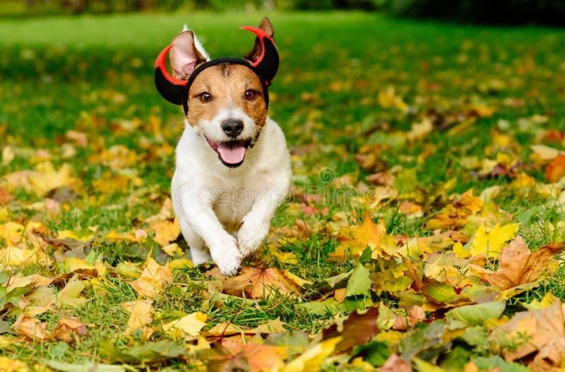 Σκυλί στο κοστούμι αποκριών του αστείου απόκοσμου διαβόλου στο πάρκο φθινοπώρου στοκ εικόνες