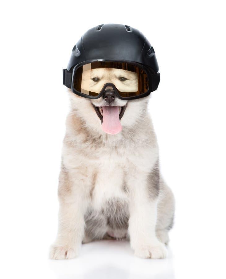 Σκυλί στο κράνος σκι και προστατευτικά δίοπτρα για να κάνει σκι Απομονωμένος στο λευκό στοκ εικόνα