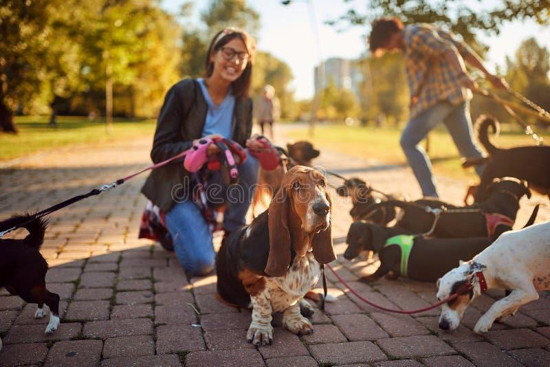 Σκυλί στο λουρί και απόλαυση στο πάρκο στοκ εικόνες με δικαίωμα ελεύθερης χρήσης